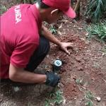 Cara Mengatasi Rayap Tanah