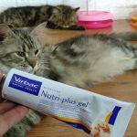 Vitamin Kucing di Apotik untuk Berbagai Kondisi