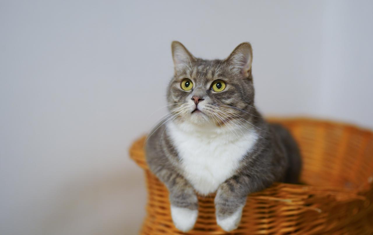 Tips dan Manfaat Berbicara dengan Kucing