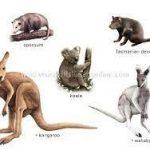 Ciri Ciri Fauna Indonesia Bagian Timur