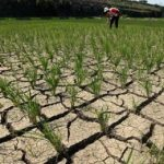 Permasalahan Pertanian yang Sering Dihadapi Petani
