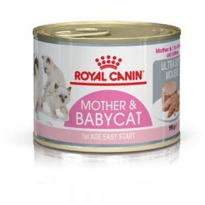 makanan untuk induk kucing